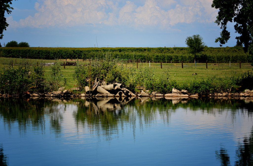 Effingham County Georgia Land for Sale